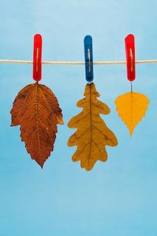 Três folhas de outono suspensas de prendedores de roupa de um varal em um azul.