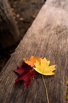 Três folhas de plátano do outono em amarelo, alaranjado e vermelho em um fundo de madeira. composição de outono