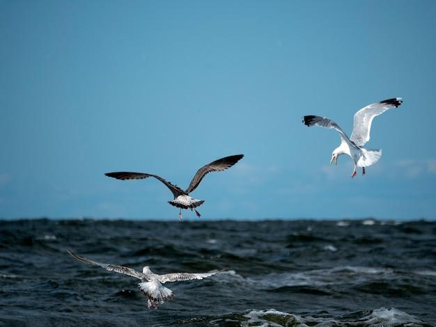 Três gaivotas voam sobre as ondas do mar, caçando peixes em um dia ensolarado