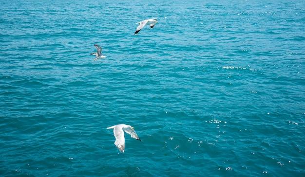 Três gaivotas voando sobre o mar azul, plano de fundo