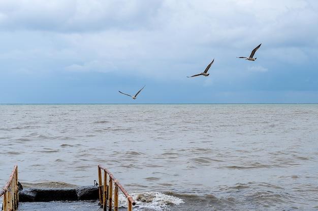 Três gaivotas voando sobre o mar negro