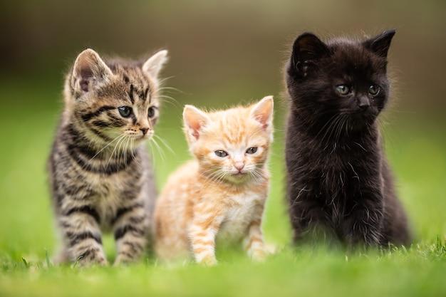 Três gatinhos brincalhões, sentados e parados lado a lado na grama do jardim.