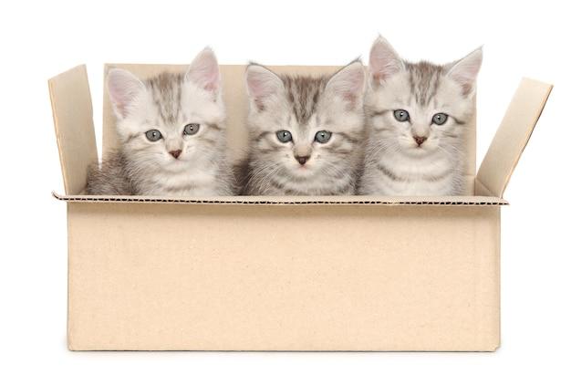 Três gatinhos em uma caixa de papelão