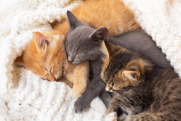 Três gatinhos fofos tabby dormindo e abraçando no lenço de malha branco. animal doméstico.