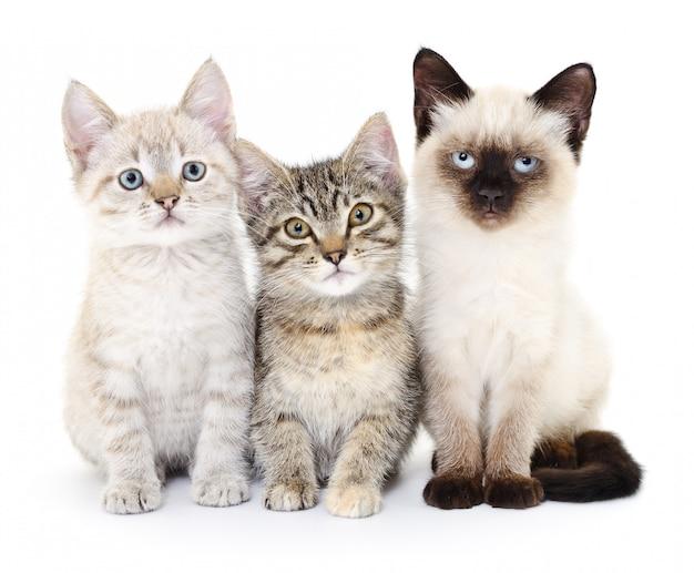 Três gatinhos pequenos