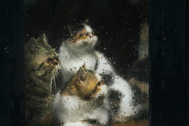 Três gatos através de uma janela molhada