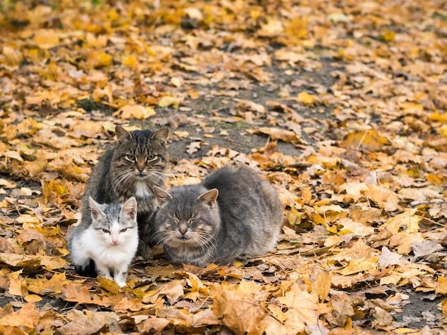 Três gatos se aquecem no outono park.