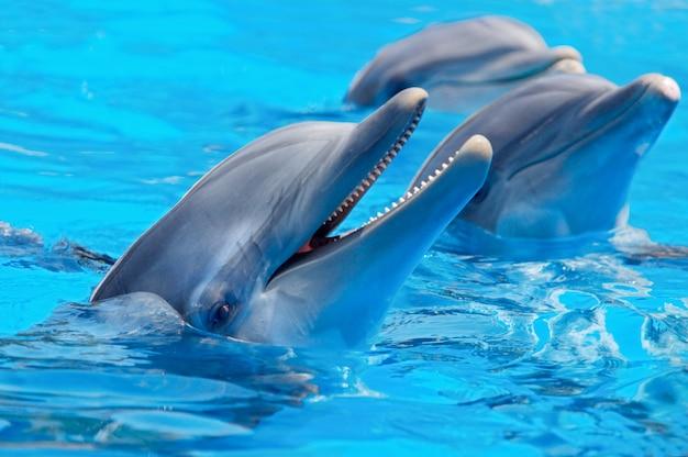 Três golfinhos bonitos e engraçados