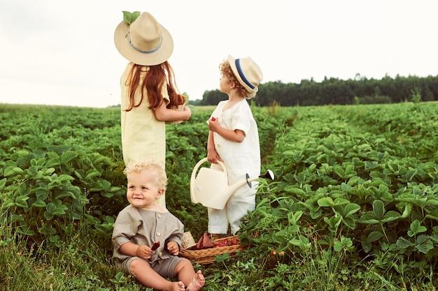Três jovens crianças caucasianos, vestidas com linho colhem morangos no campo e divirtam-se
