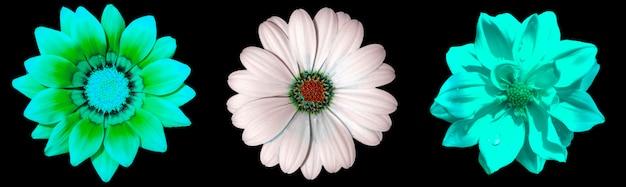 Três lindas flores brancas em um cartão postal ou superfície de carta isolada