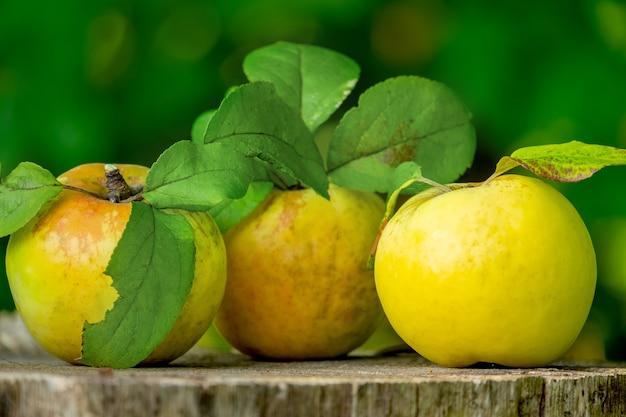 Três maçãs verdes frescas com folhas em uma placa de madeira, close-up