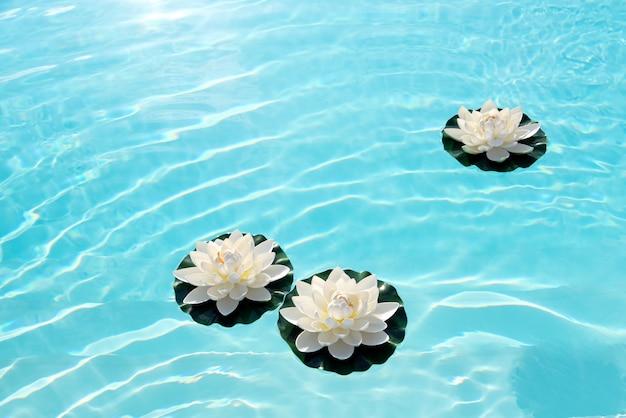 Três nenúfares brancos ou flores de lótus na água