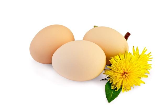 Três ovos de galinha com folhas e duas flores de dente de leão isoladas no fundo branco