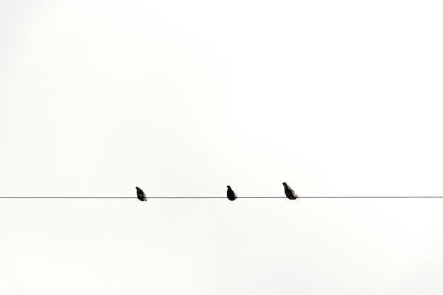 Três, pássaro, ligado, cabo