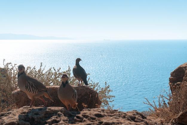 Três pássaros na falésia alta sobre o mar