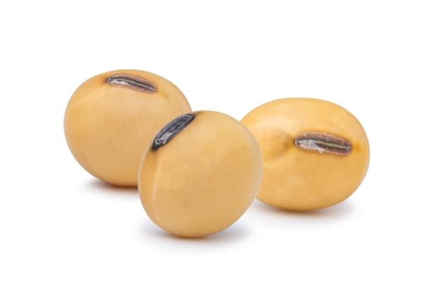 Três sementes de soja secas amarelas.