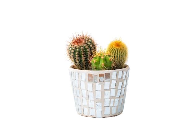 Três tipos de cactos em um vaso isolado no fundo branco.