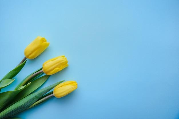 Três tulipas amarelas sobre fundo azul, com espaço de cópia