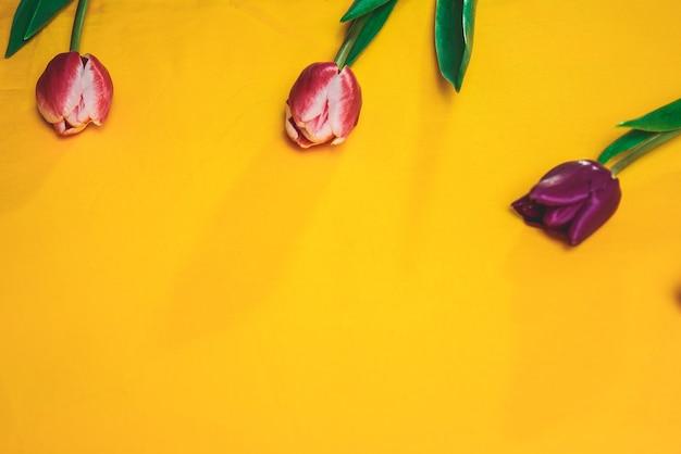 Três tulipas roxas em um fundo amarelo. copyspace