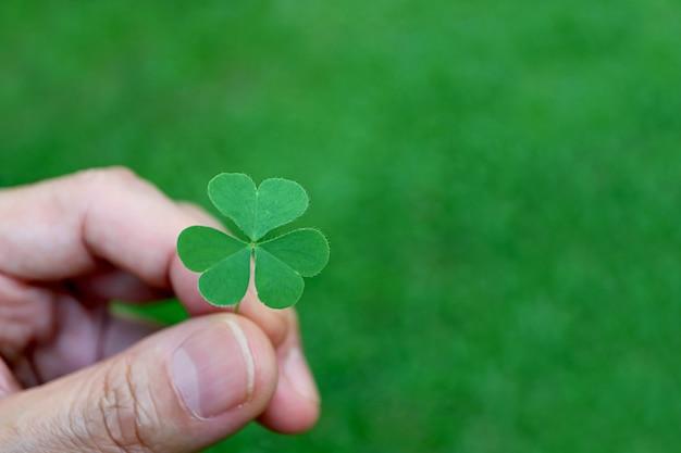 Trevo verde irlandês folhas na mão em campo verde embaçado