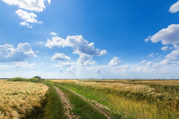 Trilha ao longo do campo de trigo, paisagem fora dos campos da cidade da ucrânia