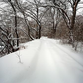 Trilha automotiva fora da estrada em uma floresta com neve