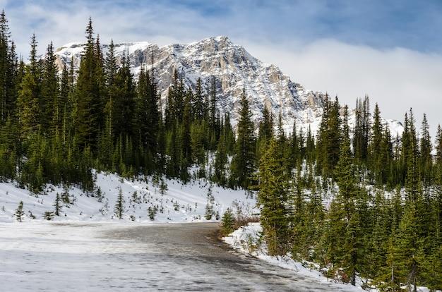 Trilha bonita da paisagem ao lago peyto no parque nacional de banff em alberta, canadá