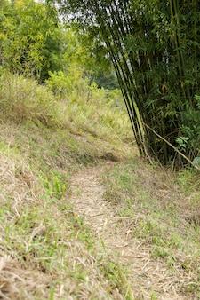 Trilha da floresta com bambus ligando para chegar ao cume da montanha em teresópolis.