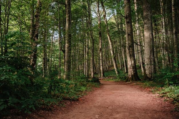 Trilha da floresta