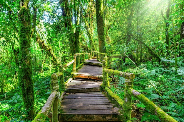 Trilha da natureza de ang ka no parque nacional doi inthanon, chiang mai, tailândia.