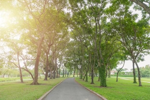 Trilha das árvores do caminho e de orquídea para correr no parque no campo de grama verde.