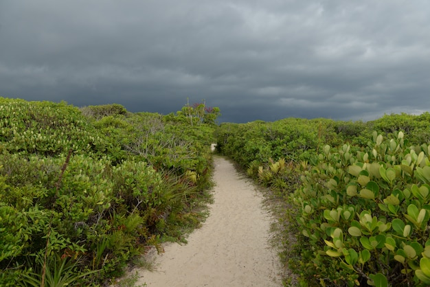 Trilha de areia no meio da vegetação costeira e nuvens de chuva na ilha do cardoso