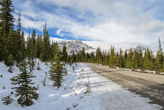 Trilha de belas paisagens para o lago peyto no parque nacional de banff, em alberta, canadá