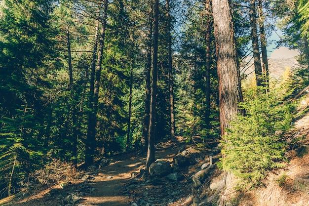 Trilha de caminhada colorida da natureza da árvore e da floresta sem nenhuma pessoa.