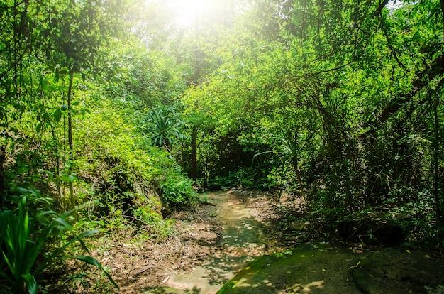 Trilha de caminhada na floresta tropical