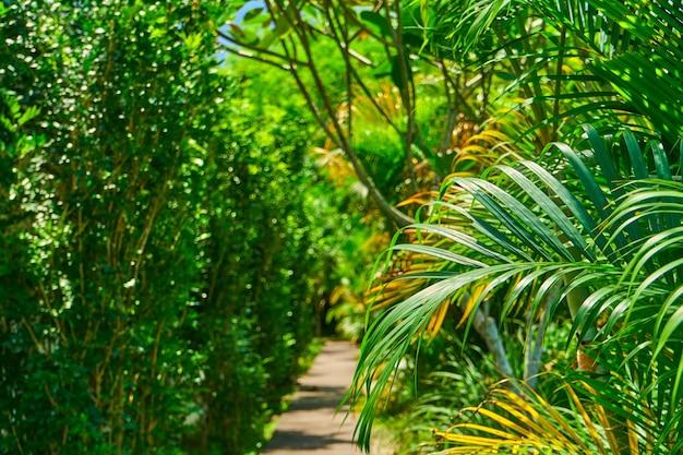 Trilha de caminhada no parque através de densas plantas verdes rasteiras
