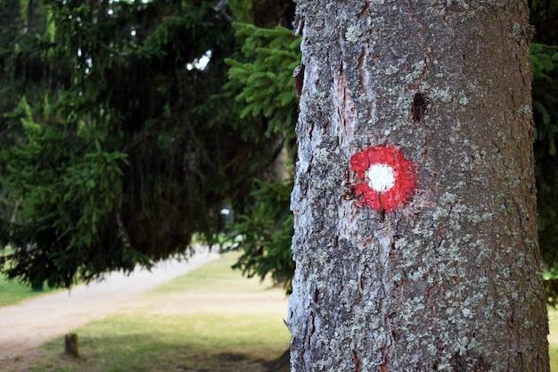 Trilha de caminhada rótula vermelha e branca na casca de árvore. trilha número um escrito por baixo. departamento de campo de efeito de campo.