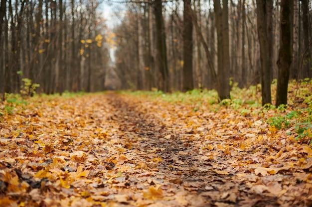Trilha de floresta outono com folhas caídas