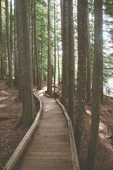 Trilha de madeira cercada por árvores em uma floresta sob a luz do sol - perfeita para papéis de parede