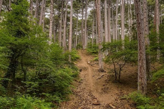 Trilha de mishor que leva ao topo da montanha aipetri