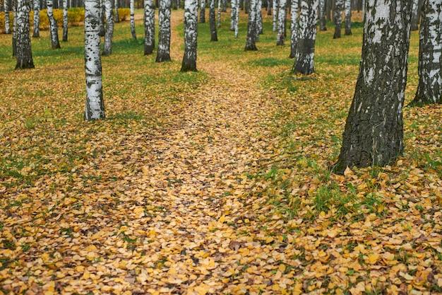 Trilha de outono no parque