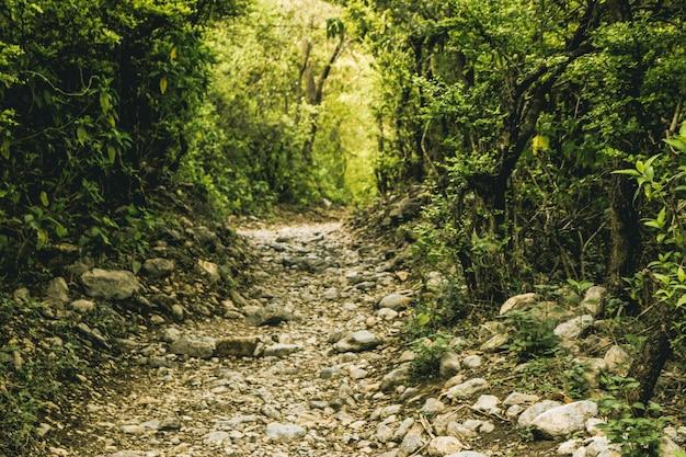 Trilha de prata trilhas de ecologia de árvores de floresta