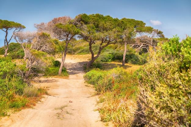 Trilha de terra arenosa que atravessa bosques costeiros e arbustos