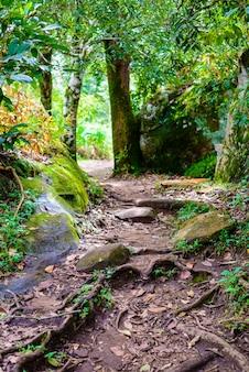 Trilha de turismo na floresta no fundo do parque nacional phu hin rong kla
