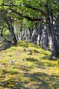 Trilha, estrada, caminho na floresta das montanhas da crimeia, rochas caem na grama cresce grama verde