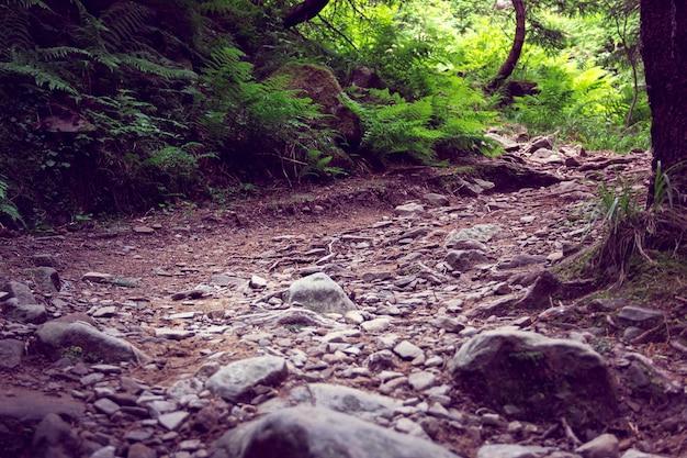 Trilha na floresta com grandes pedras em primeiro plano