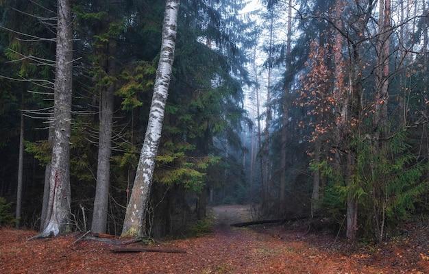 Trilha na floresta de outono com bétulas em uma névoa azul no início da manhã