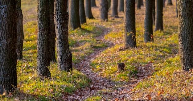 Trilha na floresta de outono entre as árvores em tempo ensolarado
