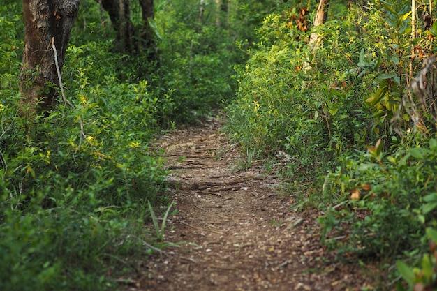 Trilha na floresta de verão