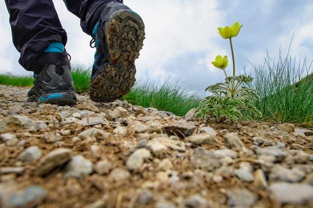 Trilha na montanha com detalhe de sapato caminhando perto de uma flor